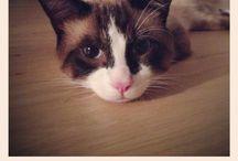 Otto / Otto... ma quanto amo i gatti!!!
