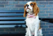 Happy Tails Photo Gallery / These happy tails are all wearing K9 Couture Co