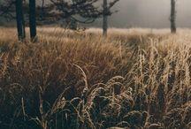 Hösten bryter ner mig | Autumn