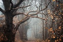 into the forest.....