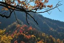 Fall / Welcome to colorful leaves, cooler weather and pumpkin flavored everything!