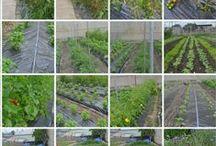 Flora-Flow Gardens  / Gardens grown using Flora Flow.