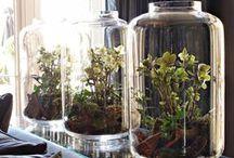 Greenhouse en tuinkas