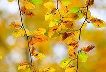 Autumn❧ / Jesień