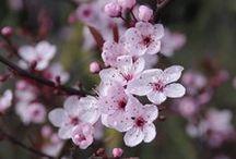 Spring / Wiosna