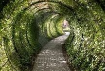Paths and tracks / Landscape Architecture