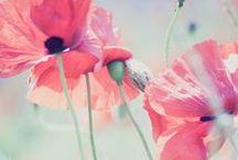 Flores :D
