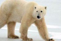Canada e Alaska / Un paese meraviglioso dove la natura regala paesaggi spettacolari
