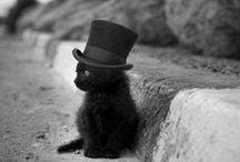 kot, kotek, kotecek, cat, kitty