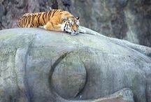 The land of tigers