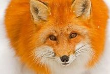 Inspiration - Orange