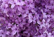Inspiration - Purple