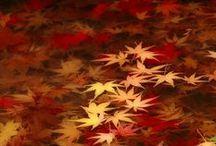 Autumn- I LoVe it