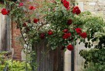jardin.....