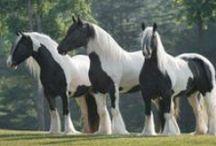 horses gods most beautiful creation / by Kimberly