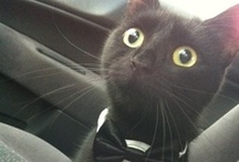 Nellycat
