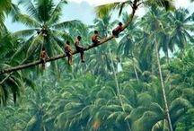 Kerala - My State