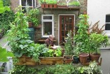 Urban Farmer / From city windowsills to suburban back gardens. Whatever your space, inspirational ideas for how you can grow your own nutrient rich food. Share your favourite ideas of growing food in urban gardens.