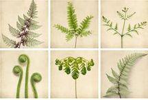 landskapsplanter