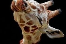 {Animals} / by Carol Denning