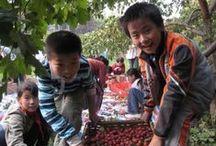 * CHINA | TIANJIN MUNICIPALITY / Ali's Travels