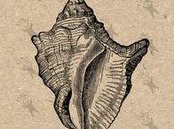 Nautical Antique image