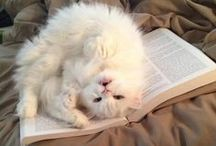 Books. Cats. Love. / What more can we say?