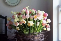 Spring Flowers / beautiful spring flowers to admire and inspire