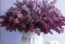 Purple Flowers / purple flowers to admire and inspire