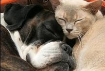 Animals-Share the Love / by joan turchino