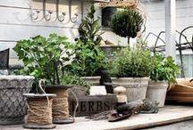 My (dream) garden / Mijn droom tuin