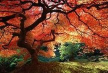 Herfst/Autumn / Alles wat te maken heeft met de herfst. All stuff about autumn