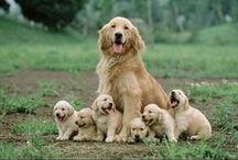 Puppy Love / by Lisa Remus