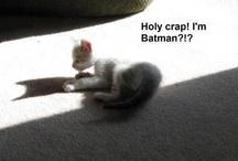 Cat Memes / by Dianne Ruggiero