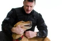 Canine (k-9) / Working dogs, working animals, canine, police dogs, ottawa police, ottawa, city of ottawa.