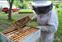 Eversweet Apiaries in the News / Featured newspaper articles, online media, etc. about Eversweet Apiaries.