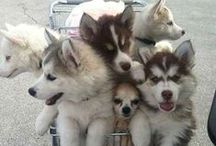 Doggies. / Animals of the canine variety!