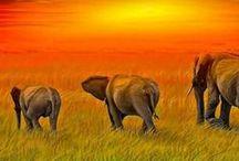 Elephant Parade / I like elephants.