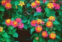 Mes rêves jardin