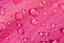 Shades of Pink