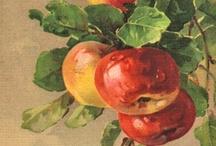 Apple of My Eye / by Jane Morrison