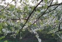 Buiten! / Buiten gebeurt het! Frisse wind, voorzichtig lentezonnetje en herfstzon. Buiten is het goed: Kom op: naar buiten!