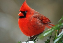 BIRDS / Flying beauties, flying souls.