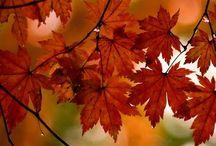 Autumn Fall