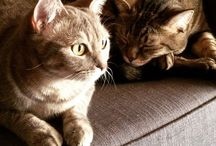 Sweet cats / I present Cookie and Kika