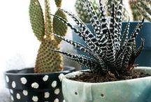 Les cactus ça piquent !