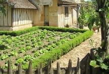 garden - vegetable & herb garden / by Brigitta Gábor (boGár krea)