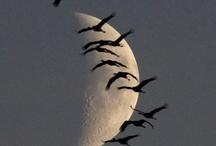 Sun, Moon, Stars / by Jo George