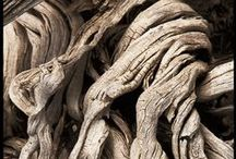 The Beauty of Wood / Roots, beginnings, earth, life & artisans