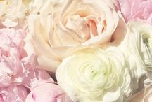 flowers / by Olive S
